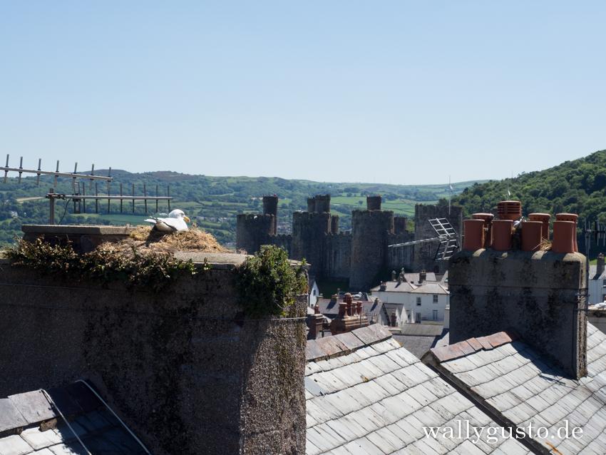 Spaziergang auf der Wehrmauer | Conwy