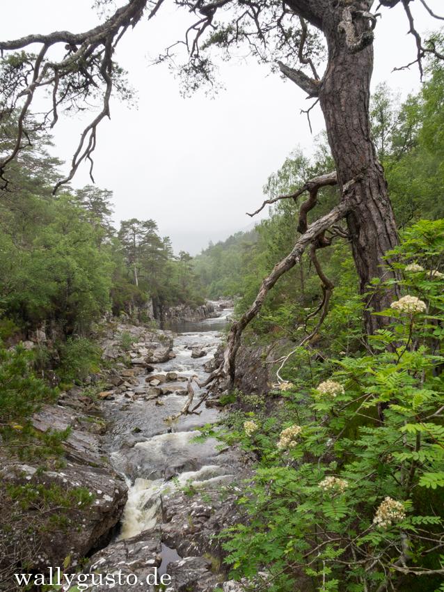 Dog Fall Trail | Schottland