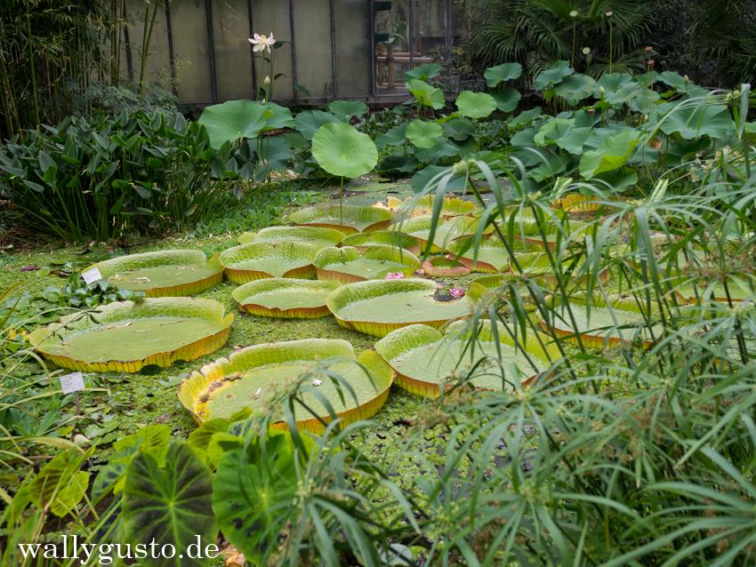 Köln – Ein Wochenende in Deutschlands jeckster Stadt | Flora & Botanischer Garten