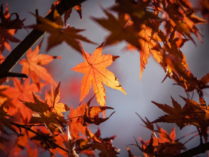 Lieblingslinks Oktober