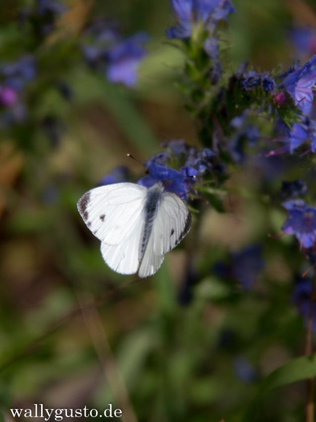 Flora & Fauna im Müritz Nationalpark
