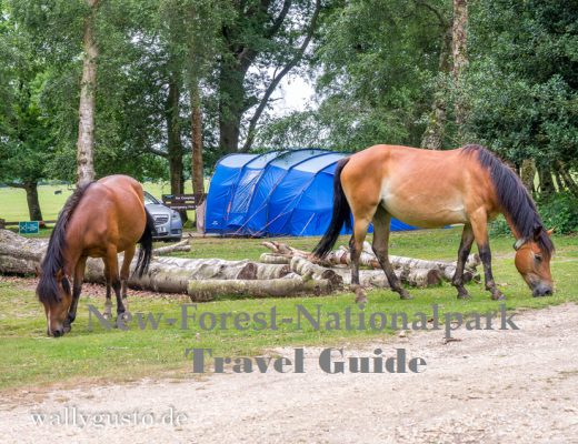 New-Forest-Nationalpark | Travel Guide