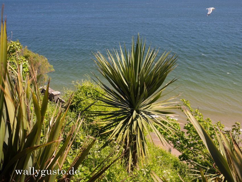Tenby - Travel Guide | Pembrokeshire Coast Nationalpark