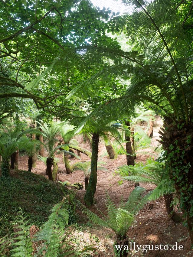 Trewidden Gardens | Travel Guide Penwith-Halbinsel auf www.wallygusto.de
