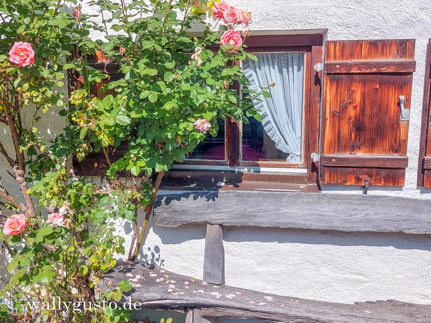 Wanderung von Peretshofen nach Dietramszell #wallygustosunterwegs