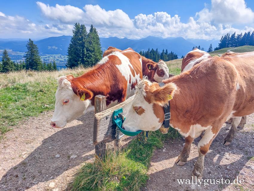 Wanderung auf den Heiglkopf – über Zwiesel und Blomberg #wallygustosunterwegs